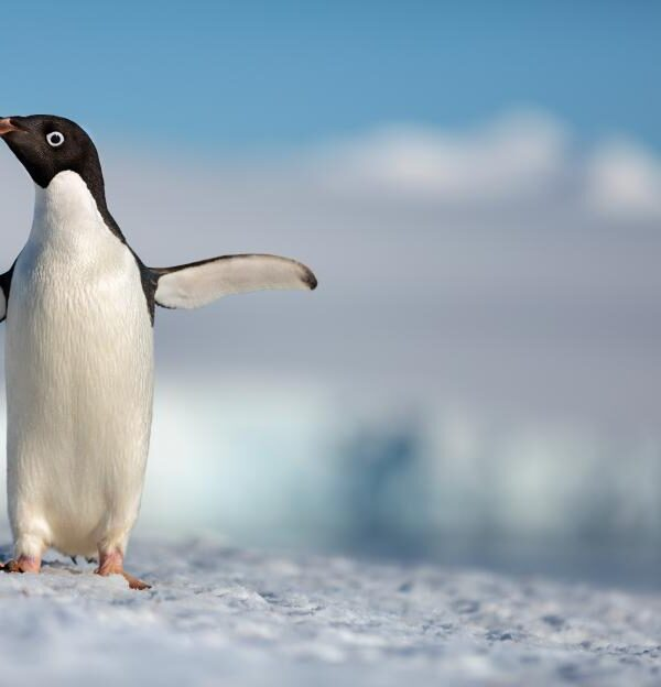 Disneynature Penguins: Getting Your Kids Excited About Earth Day