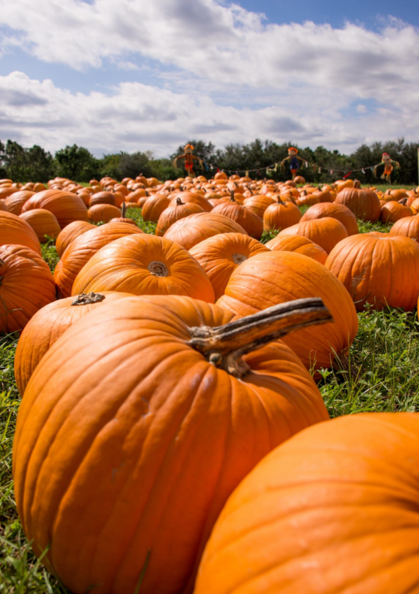 The Best Pumpkin Patches In And Around NYC