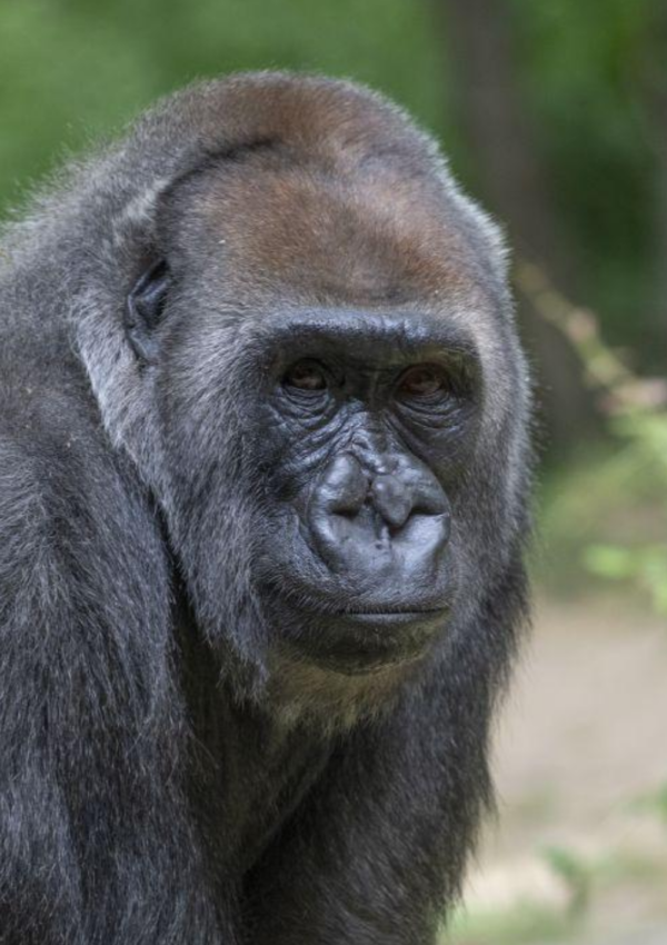 Here Are the Safety Precautions Being Taken at the Bronx Zoo Since Reopening
